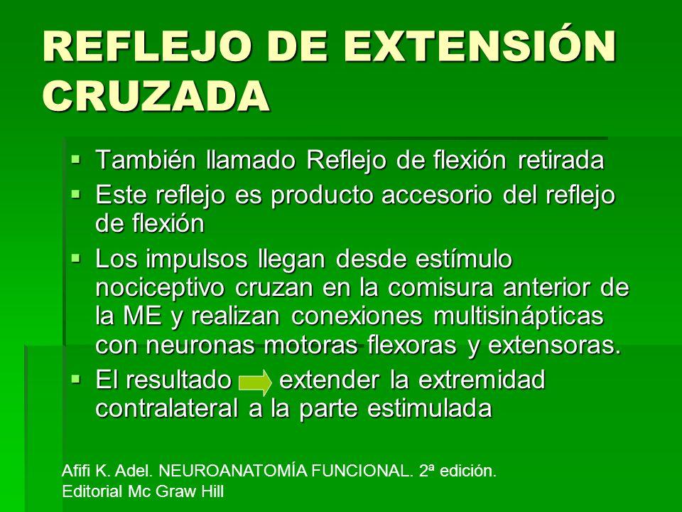 REFLEJO DE EXTENSIÓN CRUZADA También llamado Reflejo de flexión retirada También llamado Reflejo de flexión retirada Este reflejo es producto accesori