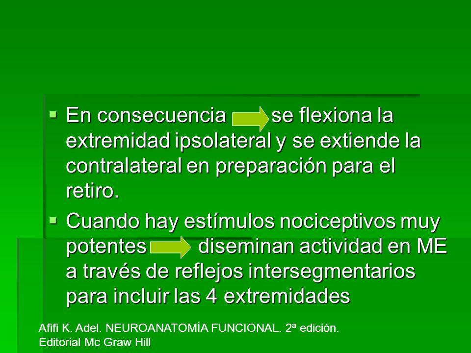 En consecuencia se flexiona la extremidad ipsolateral y se extiende la contralateral en preparación para el retiro. En consecuencia se flexiona la ext