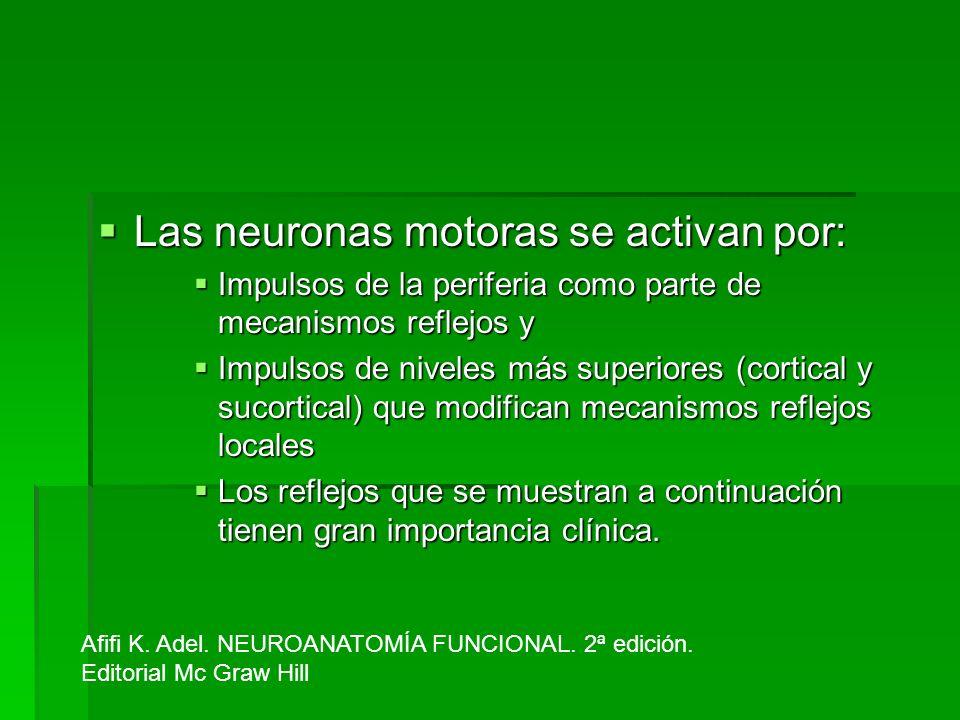 Las neuronas motoras se activan por: Las neuronas motoras se activan por: Impulsos de la periferia como parte de mecanismos reflejos y Impulsos de la