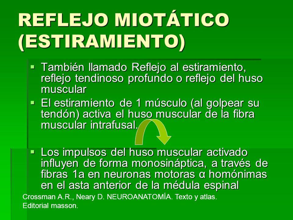 REFLEJO MIOTÁTICO (ESTIRAMIENTO) También llamado Reflejo al estiramiento, reflejo tendinoso profundo o reflejo del huso muscular También llamado Refle