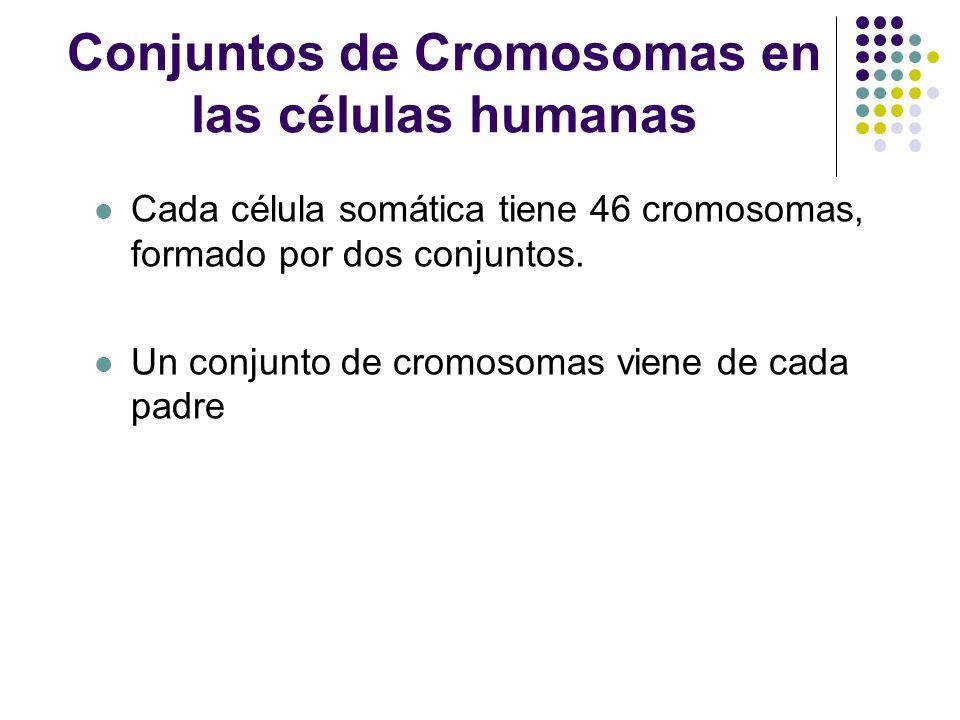 5 µm Pares de cromosomas homologos Centromero Crromatidas hermanas Un cariotipo Es una representación visual, ordenada de los cromosomas en una célula