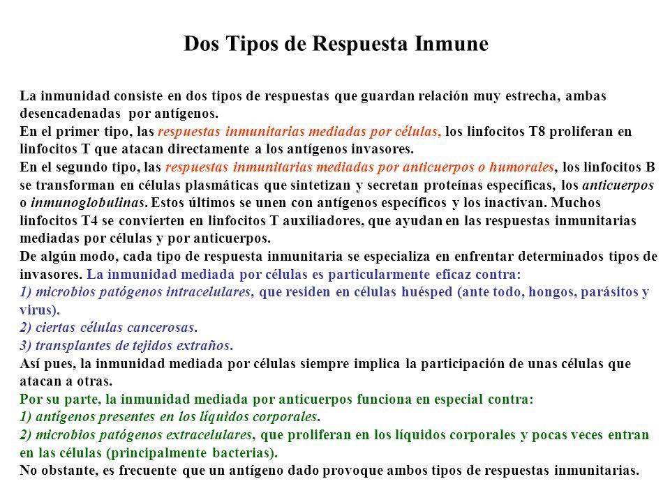 Dos Tipos de Respuesta Inmune La inmunidad consiste en dos tipos de respuestas que guardan relación muy estrecha, ambas desencadenadas por antígenos.