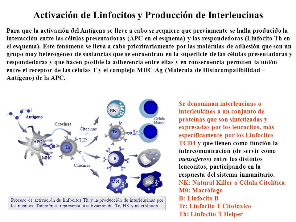 Activación de Linfocitos y Producción de Interleucinas Para que la activación del Antígeno se lleve a cabo se requiere que previamente se halla produc