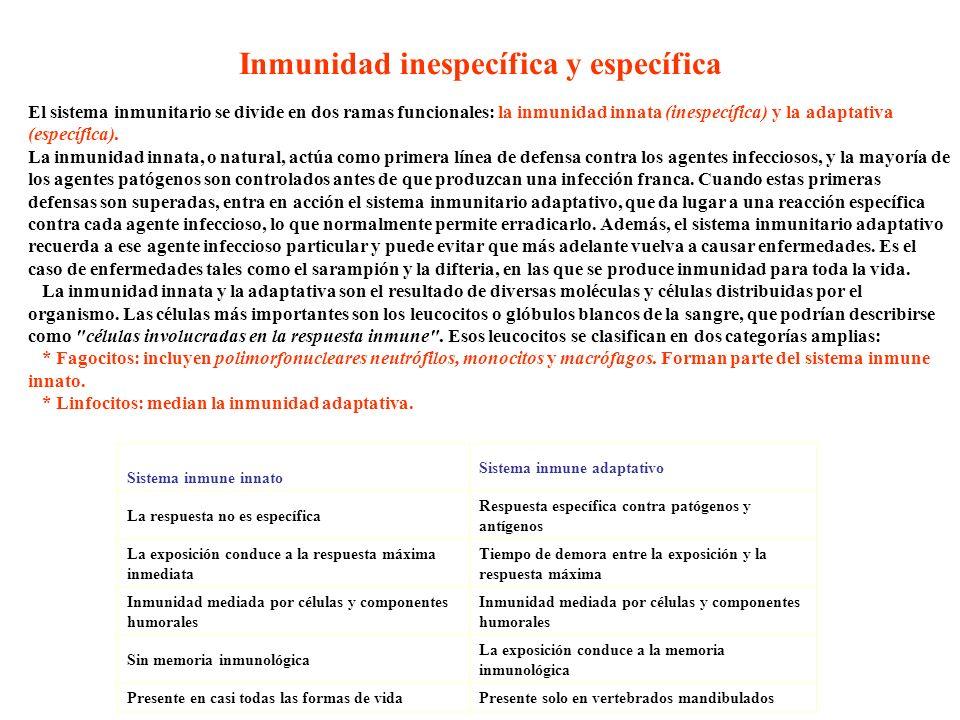 Inmunidad inespecífica y específica El sistema inmunitario se divide en dos ramas funcionales: la inmunidad innata (inespecífica) y la adaptativa (esp