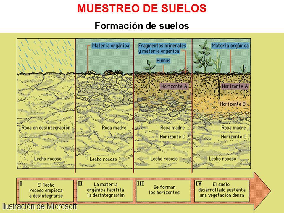 Ciencias de la Tierra II Formación de suelos MUESTREO DE SUELOS