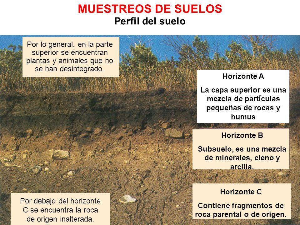 Ciencias de la Tierra II Perfil del suelo Por lo general, en la parte superior se encuentran plantas y animales que no se han desintegrado. Por debajo