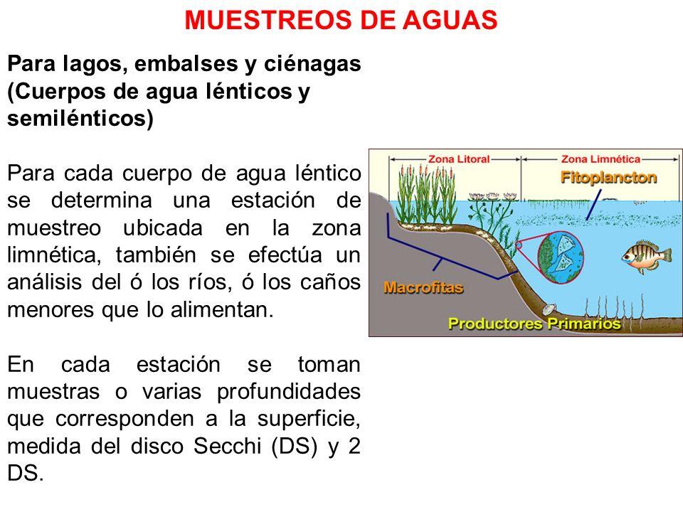 Para lagos, embalses y ciénagas (Cuerpos de agua lénticos y semilénticos) Para cada cuerpo de agua léntico se determina una estación de muestreo ubica