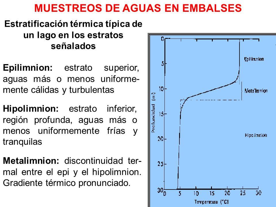 Estratificación térmica típica de un lago en los estratos señalados Epilimnion: estrato superior, aguas más o menos uniforme- mente cálidas y turbulen