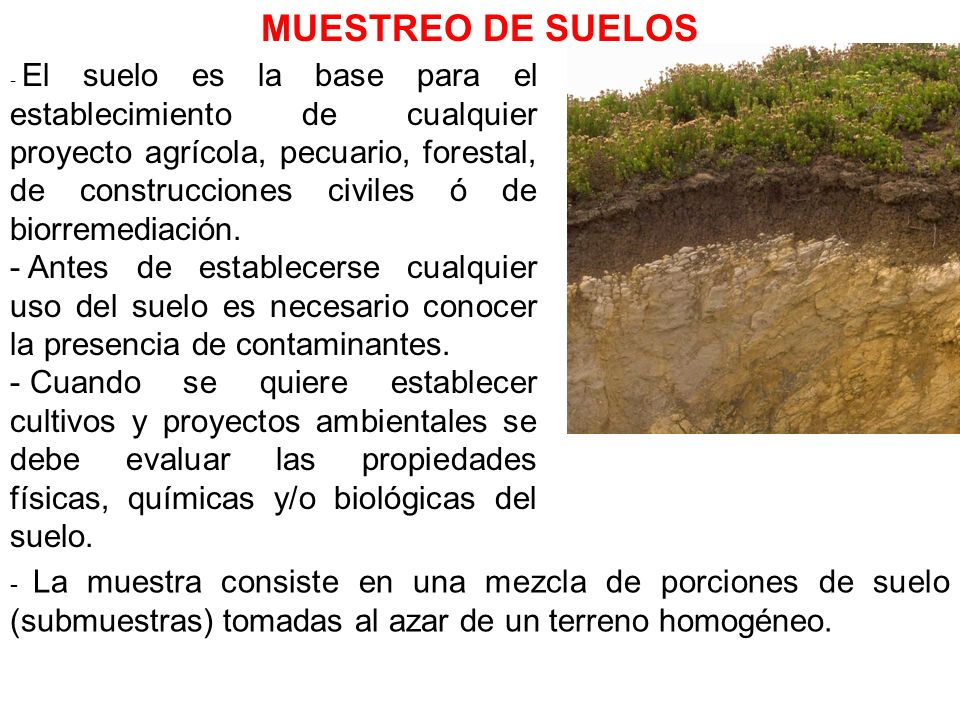 - El suelo es la base para el establecimiento de cualquier proyecto agrícola, pecuario, forestal, de construcciones civiles ó de biorremediación. - An