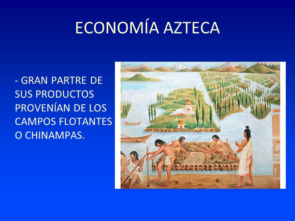 ECONOMÍA AZTECA - GRAN PARTRE DE SUS PRODUCTOS PROVENÍAN DE LOS CAMPOS FLOTANTES O CHINAMPAS.
