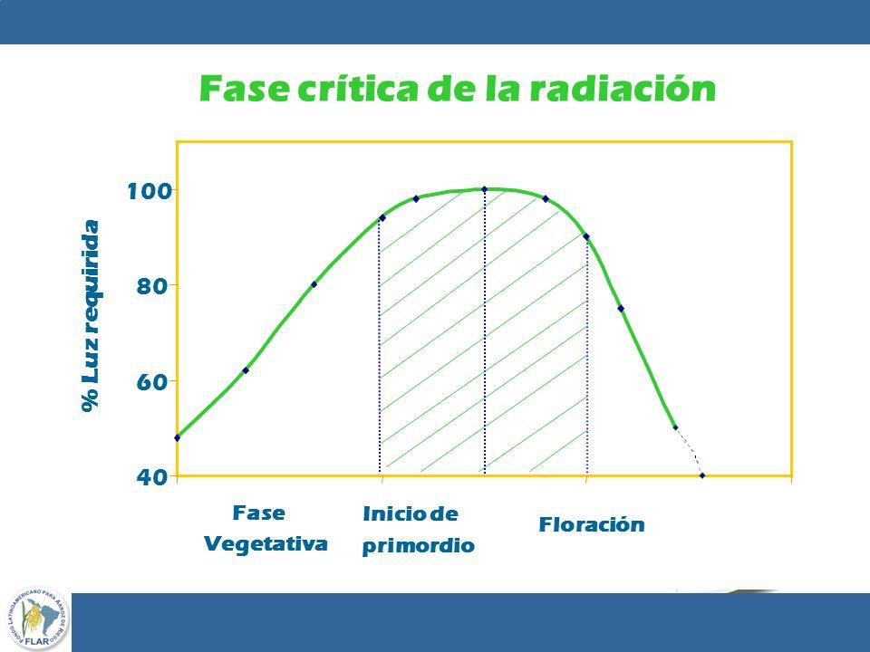 43 40 60 80 100 Inicio de primordio Floración Fase Vegetativa Fase crítica de la radiación % Luz requirida