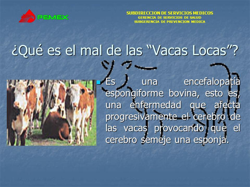 SUBDIRECCION DE SERVICIOS MEDICOS GERENCIA DE SERVICIOS DE SALUD SUBGERENCIA DE PREVENCION MEDICA ¿Qué es el mal de las Vacas Locas? Es una encefalopa