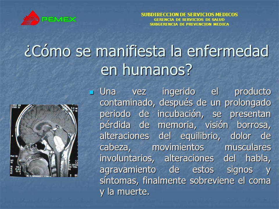 SUBDIRECCION DE SERVICIOS MEDICOS GERENCIA DE SERVICIOS DE SALUD SUBGERENCIA DE PREVENCION MEDICA ¿Cómo se manifiesta la enfermedad en humanos? Una ve
