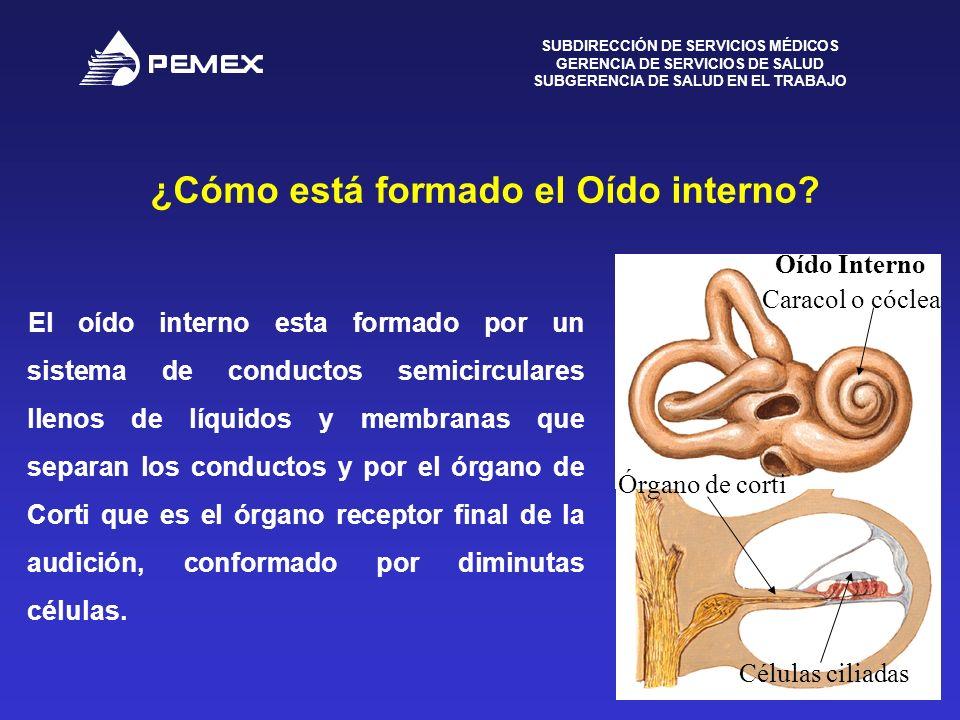 SUBDIRECCIÓN DE SERVICIOS MÉDICOS GERENCIA DE SERVICIOS DE SALUD SUBGERENCIA DE SALUD EN EL TRABAJO 4 ¿Cómo está formado el Oído interno? Martillo Yun