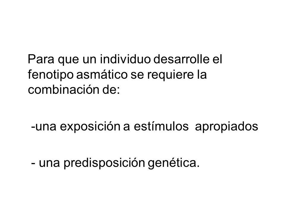 Para que un individuo desarrolle el fenotipo asmático se requiere la combinación de: -una exposición a estímulos apropiados - una predisposición genética.