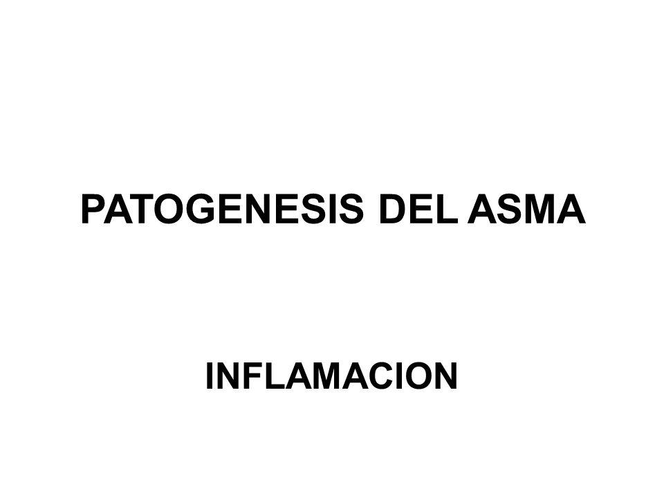 PATOGENESIS DEL ASMA INFLAMACION