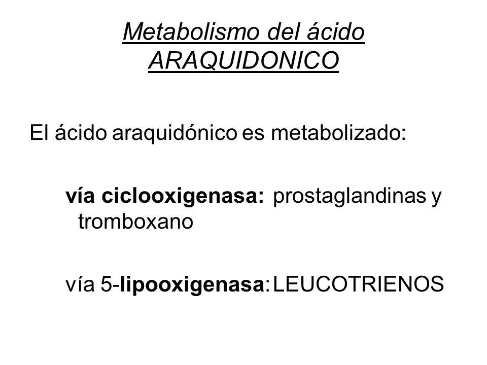 Metabolismo del ácido ARAQUIDONICO El ácido araquidónico es metabolizado: vía ciclooxigenasa: prostaglandinas y tromboxano vía 5-lipooxigenasa:LEUCOTR