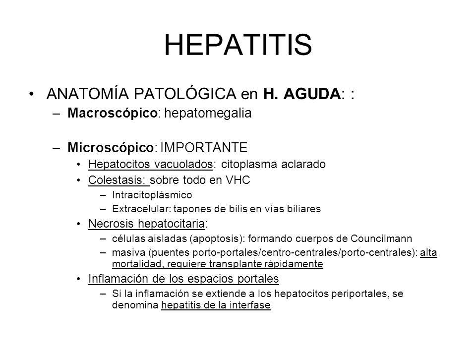 HEPATITIS ANATOMÍA PATOLÓGICA en H. AGUDA: : –Macroscópico: hepatomegalia –Microscópico: IMPORTANTE Hepatocitos vacuolados: citoplasma aclarado Colest