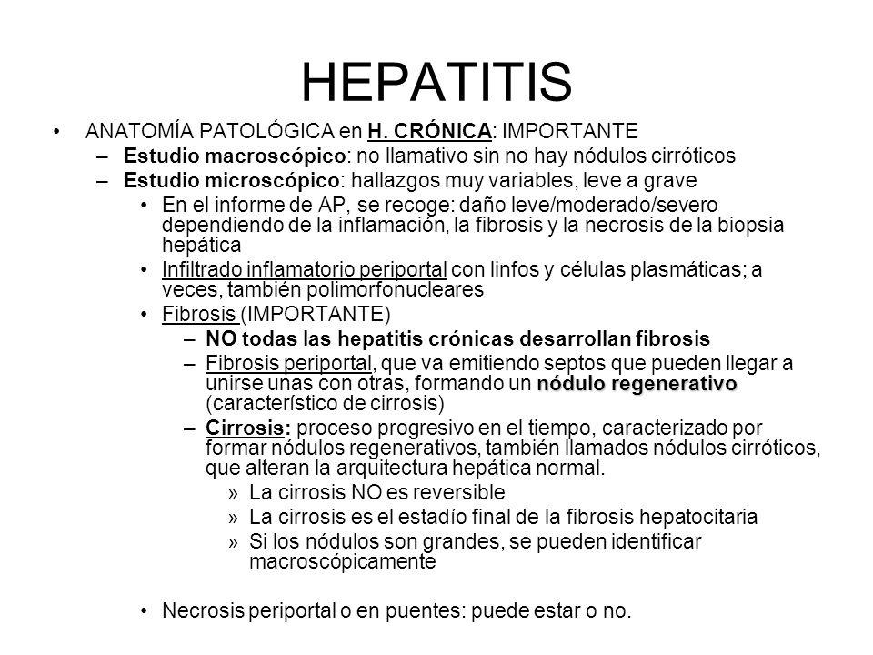 HEPATITIS ANATOMÍA PATOLÓGICA en H. CRÓNICA: IMPORTANTE –Estudio macroscópico: no llamativo sin no hay nódulos cirróticos –Estudio microscópico: halla
