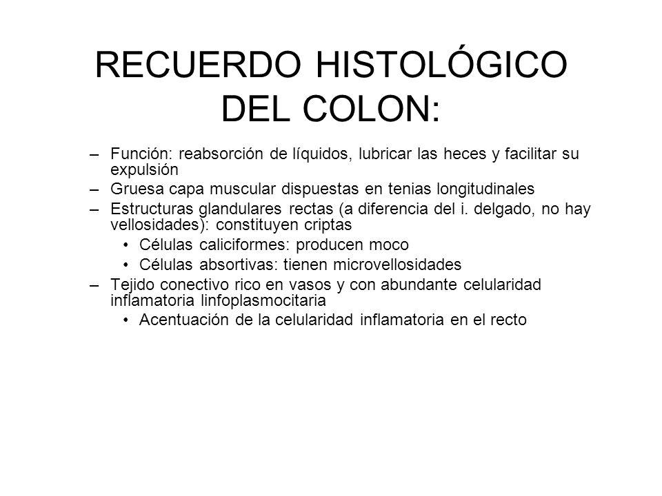 RECUERDO HISTOLÓGICO DEL COLON: –Función: reabsorción de líquidos, lubricar las heces y facilitar su expulsión –Gruesa capa muscular dispuestas en ten