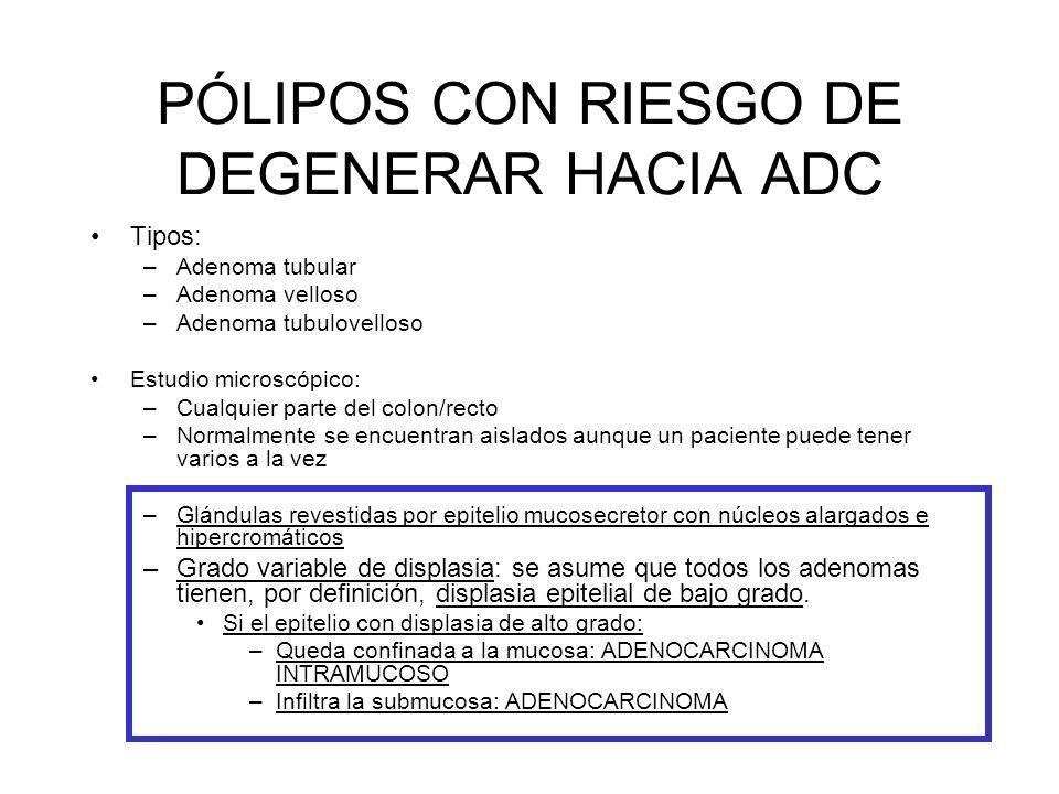 PÓLIPOS CON RIESGO DE DEGENERAR HACIA ADC Tipos: –Adenoma tubular –Adenoma velloso –Adenoma tubulovelloso Estudio microscópico: –Cualquier parte del c