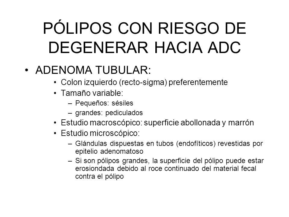PÓLIPOS CON RIESGO DE DEGENERAR HACIA ADC ADENOMA TUBULAR: Colon izquierdo (recto-sigma) preferentemente Tamaño variable: –Pequeños: sésiles –grandes:
