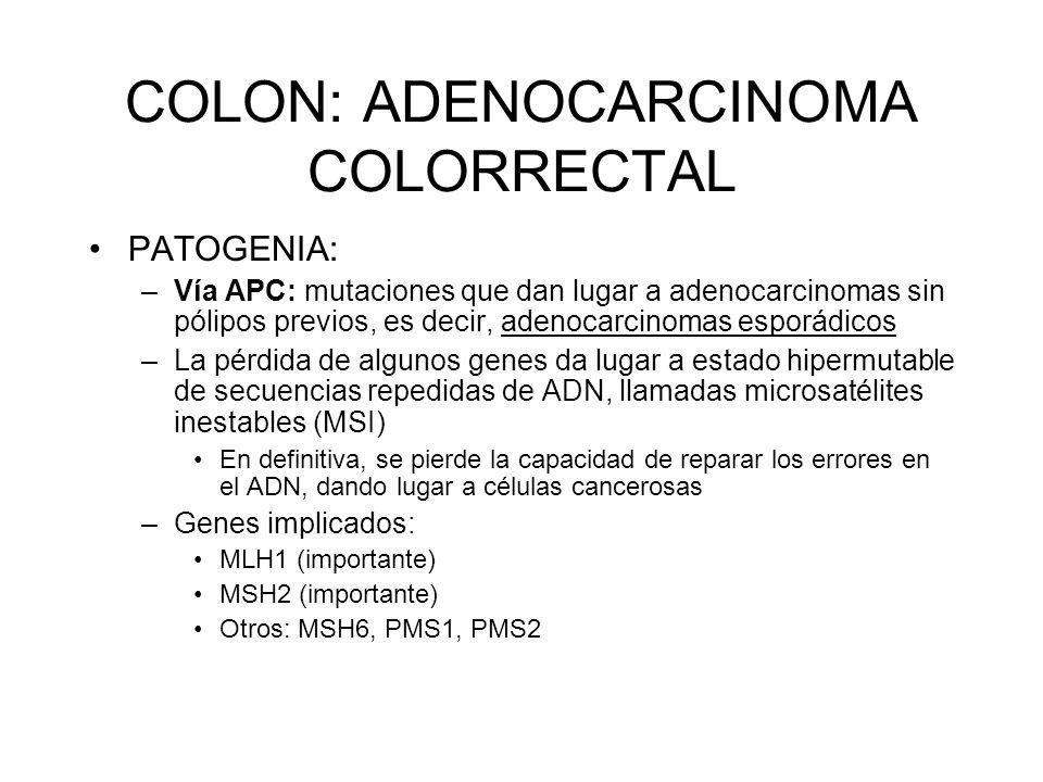 COLON: ADENOCARCINOMA COLORRECTAL PATOGENIA: –Vía APC: mutaciones que dan lugar a adenocarcinomas sin pólipos previos, es decir, adenocarcinomas espor