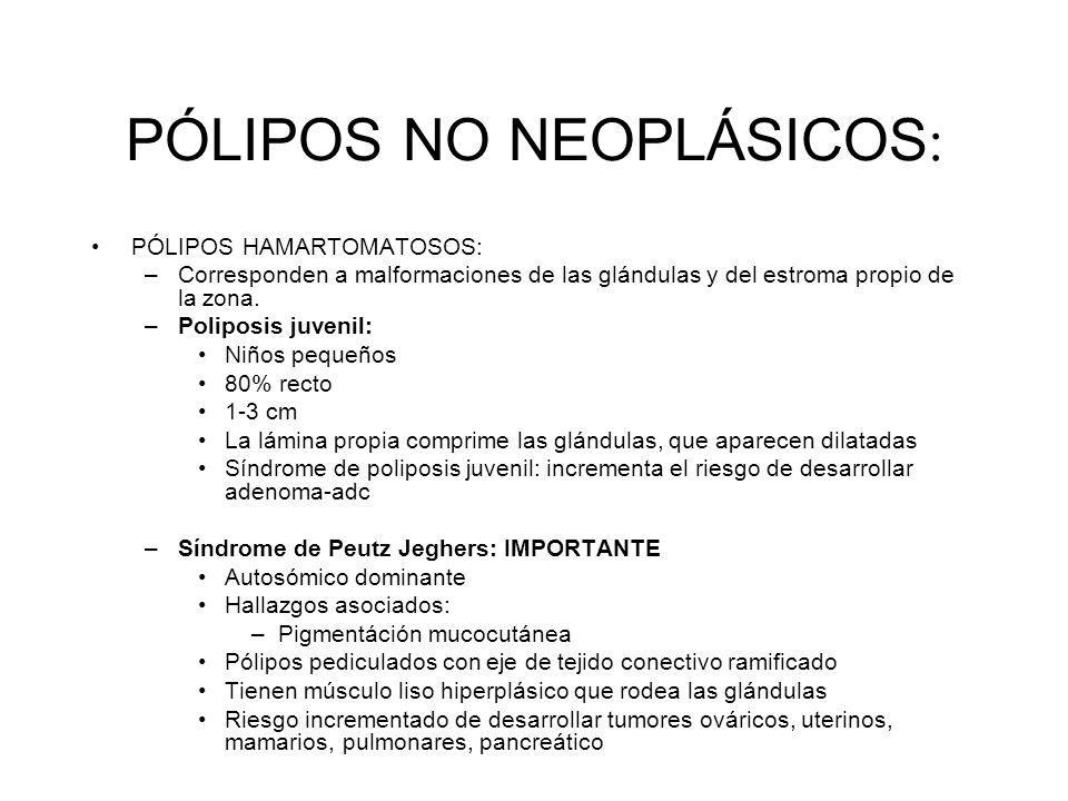 PÓLIPOS NO NEOPLÁSICOS : PÓLIPOS HAMARTOMATOSOS: –Corresponden a malformaciones de las glándulas y del estroma propio de la zona. –Poliposis juvenil: