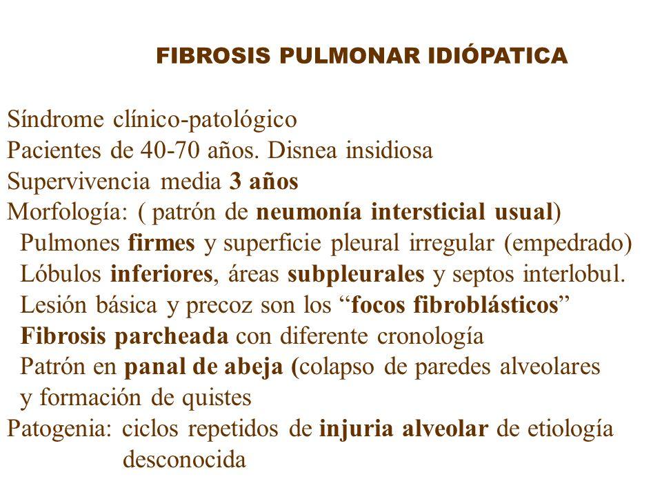 FIBROSIS PULMONAR IDIÓPATICA Síndrome clínico-patológico Pacientes de 40-70 años. Disnea insidiosa Supervivencia media 3 años Morfología: ( patrón de