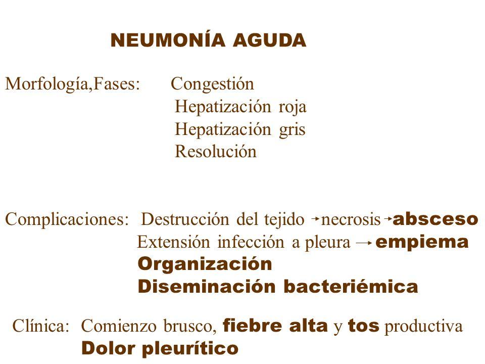 NEUMONÍA AGUDA Morfología,Fases: Congestión Hepatización roja Hepatización gris Resolución Complicaciones: Destrucción del tejido necrosis absceso Ext
