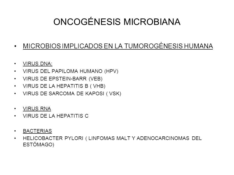 ONCOGÉNESIS MICROBIANA MICROBIOS IMPLICADOS EN LA TUMOROGÉNESIS HUMANA VIRUS DNA: VIRUS DEL PAPILOMA HUMANO (HPV) VIRUS DE EPSTEIN-BARR (VEB) VIRUS DE