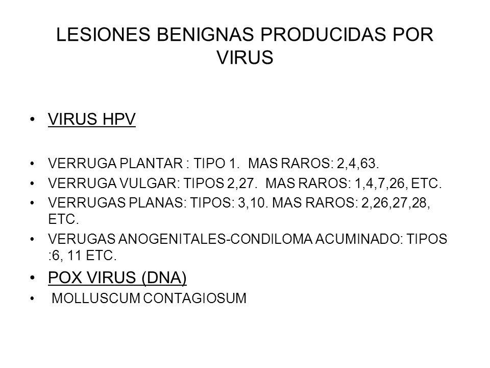 LESIONES BENIGNAS PRODUCIDAS POR VIRUS VIRUS HPV VERRUGA PLANTAR : TIPO 1. MAS RAROS: 2,4,63. VERRUGA VULGAR: TIPOS 2,27. MAS RAROS: 1,4,7,26, ETC. VE