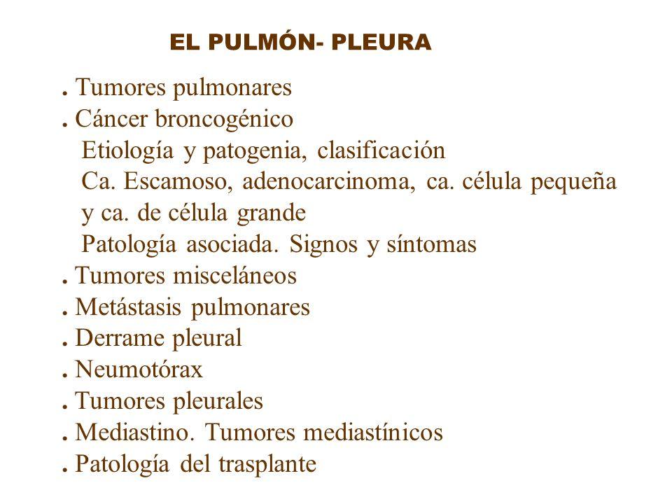 EL PULMÓN- PLEURA. Tumores pulmonares. Cáncer broncogénico Etiología y patogenia, clasificación Ca. Escamoso, adenocarcinoma, ca. célula pequeña y ca.