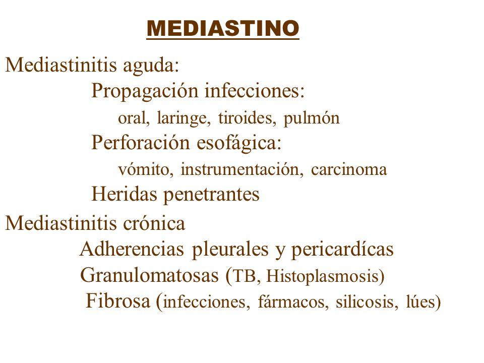 MEDIASTINO Mediastinitis aguda: Propagación infecciones: oral, laringe, tiroides, pulmón Perforación esofágica: vómito, instrumentación, carcinoma Her