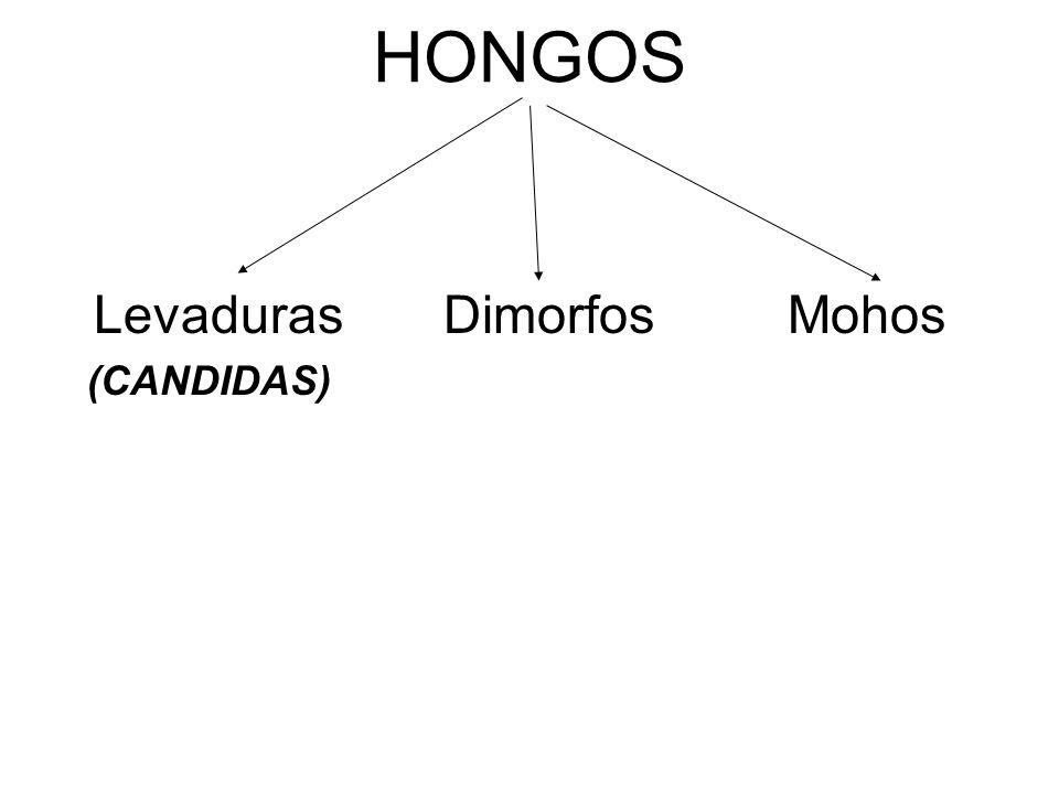 HONGOS Levaduras Dimorfos Mohos (CANDIDAS)