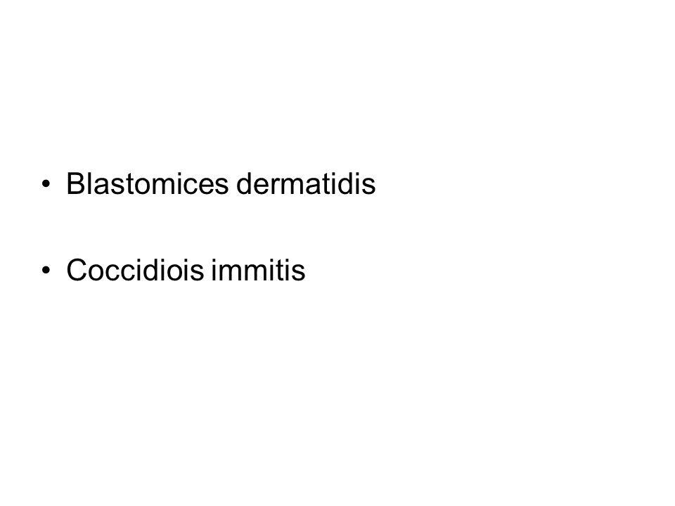 Blastomices dermatidis Coccidiois immitis