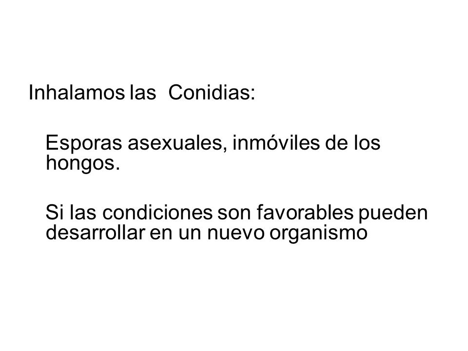 Inhalamos las Conidias: Esporas asexuales, inmóviles de los hongos. Si las condiciones son favorables pueden desarrollar en un nuevo organismo