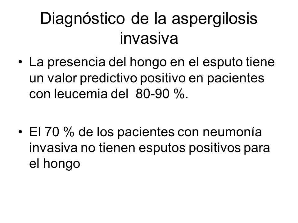 Diagnóstico de la aspergilosis invasiva La presencia del hongo en el esputo tiene un valor predictivo positivo en pacientes con leucemia del 80-90 %.