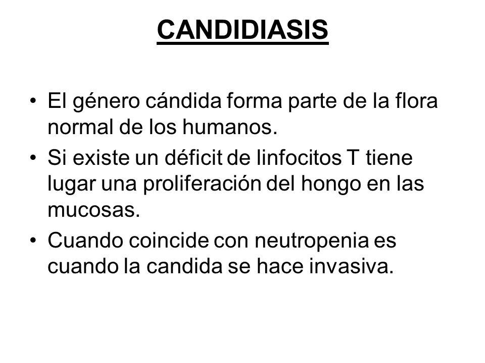 CANDIDIASIS El género cándida forma parte de la flora normal de los humanos. Si existe un déficit de linfocitos T tiene lugar una proliferación del ho