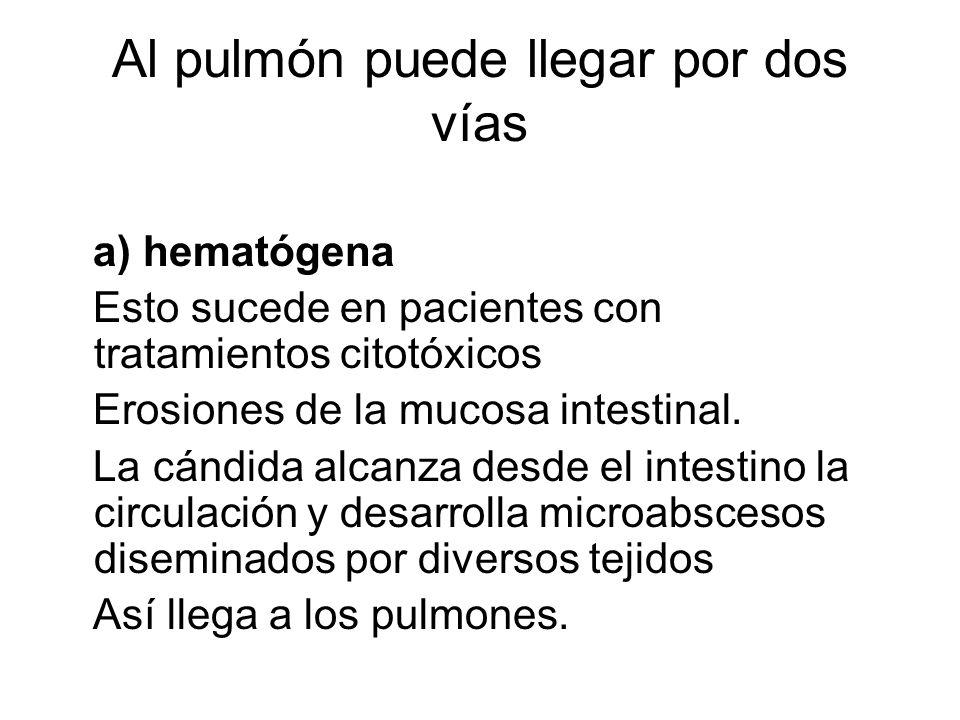 Al pulmón puede llegar por dos vías a) hematógena Esto sucede en pacientes con tratamientos citotóxicos Erosiones de la mucosa intestinal.
