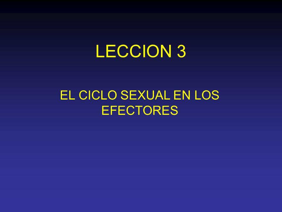 LECCION 3 EL CICLO SEXUAL EN LOS EFECTORES