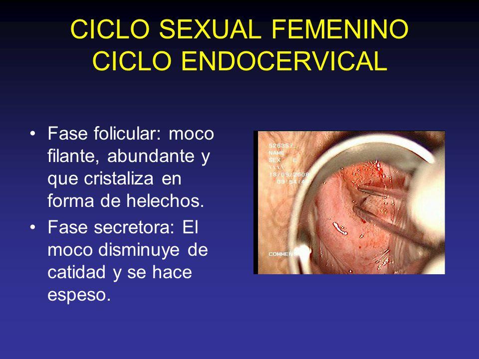 CICLO SEXUAL FEMENINO CICLO ENDOCERVICAL Fase folicular: moco filante, abundante y que cristaliza en forma de helechos. Fase secretora: El moco dismin