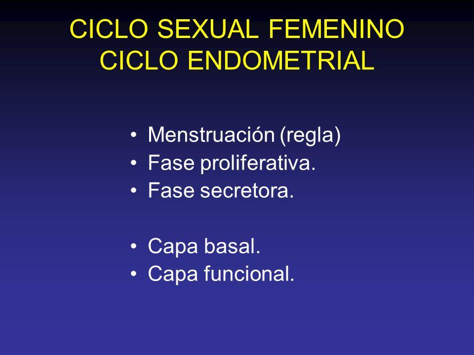 CICLO SEXUAL FEMENINO CICLO ENDOMETRIAL Menstruación (regla) Fase proliferativa. Fase secretora. Capa basal. Capa funcional.