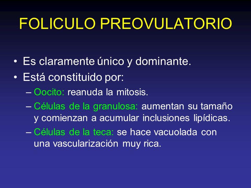 FOLICULO PREOVULATORIO Es claramente único y dominante. Está constituido por: –Oocito: reanuda la mitosis. –Células de la granulosa: aumentan su tamañ
