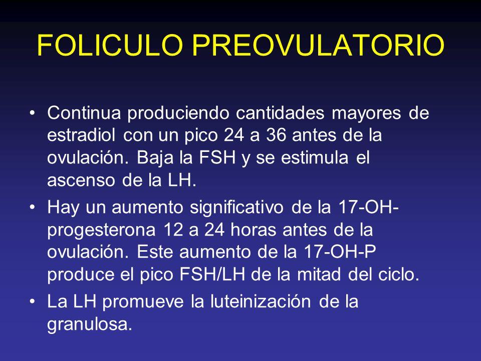 FOLICULO PREOVULATORIO Continua produciendo cantidades mayores de estradiol con un pico 24 a 36 antes de la ovulación. Baja la FSH y se estimula el as