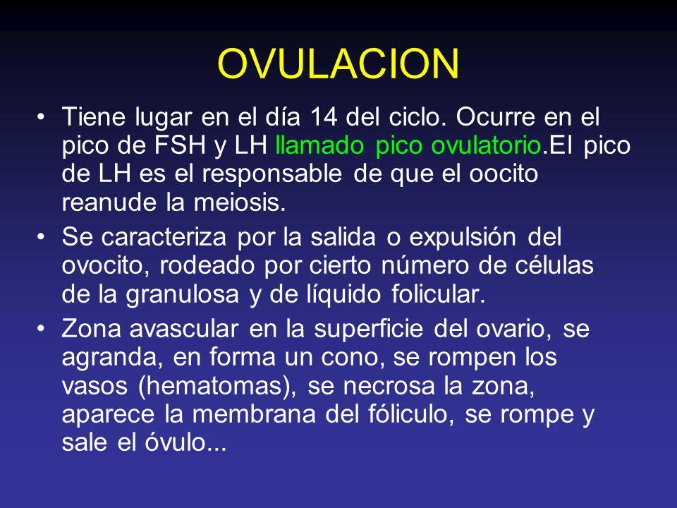 OVULACION Tiene lugar en el día 14 del ciclo. Ocurre en el pico de FSH y LH llamado pico ovulatorio.El pico de LH es el responsable de que el oocito r