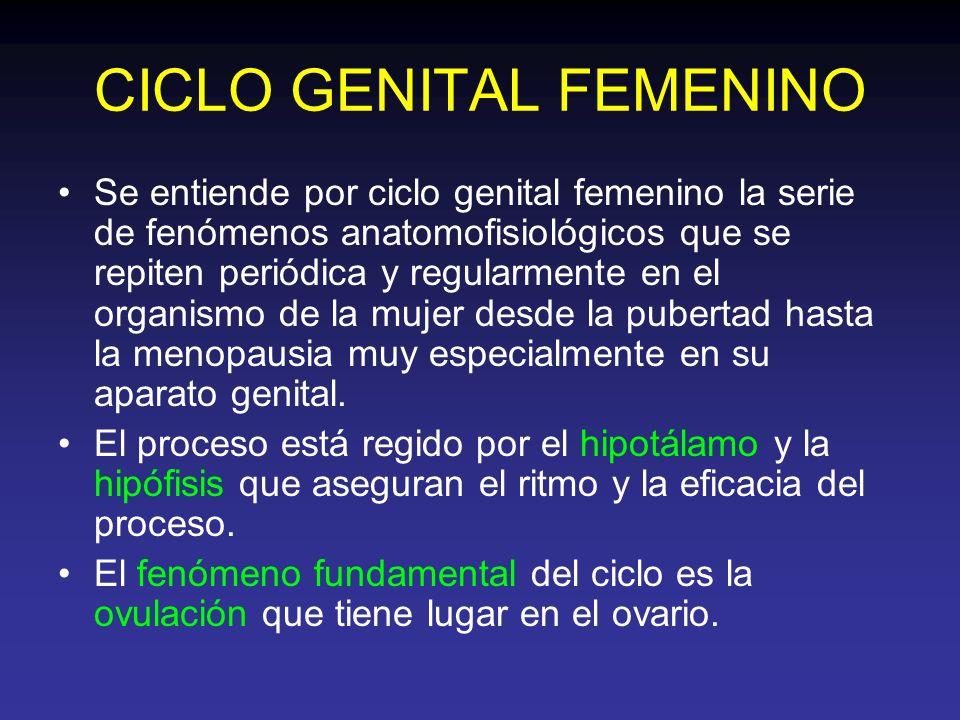 CICLO GENITAL FEMENINO Se entiende por ciclo genital femenino la serie de fenómenos anatomofisiológicos que se repiten periódica y regularmente en el