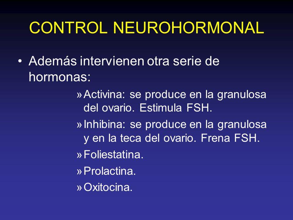 CONTROL NEUROHORMONAL Además intervienen otra serie de hormonas: »Activina: se produce en la granulosa del ovario. Estimula FSH. »Inhibina: se produce