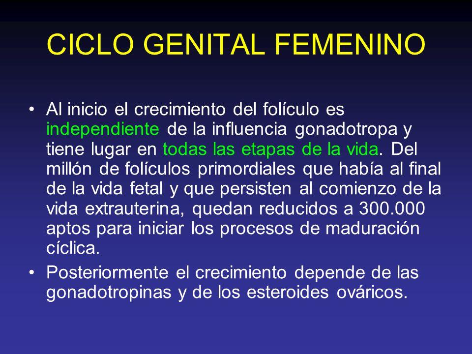 CICLO GENITAL FEMENINO Al inicio el crecimiento del folículo es independiente de la influencia gonadotropa y tiene lugar en todas las etapas de la vid
