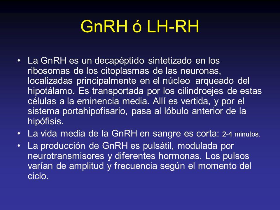GnRH ó LH-RH La GnRH es un decapéptido sintetizado en los ribosomas de los citoplasmas de las neuronas, localizadas principalmente en el núcleo arquea